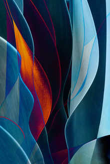 Cactus Abstraction 08
