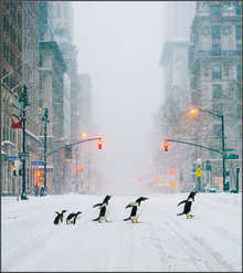 NYC Penguins