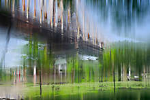 NY Projection LXV