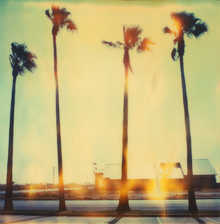 Palm Tree Restaurant